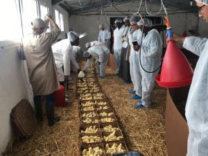 2017_Senegal-Poultry-Training_02.jpg
