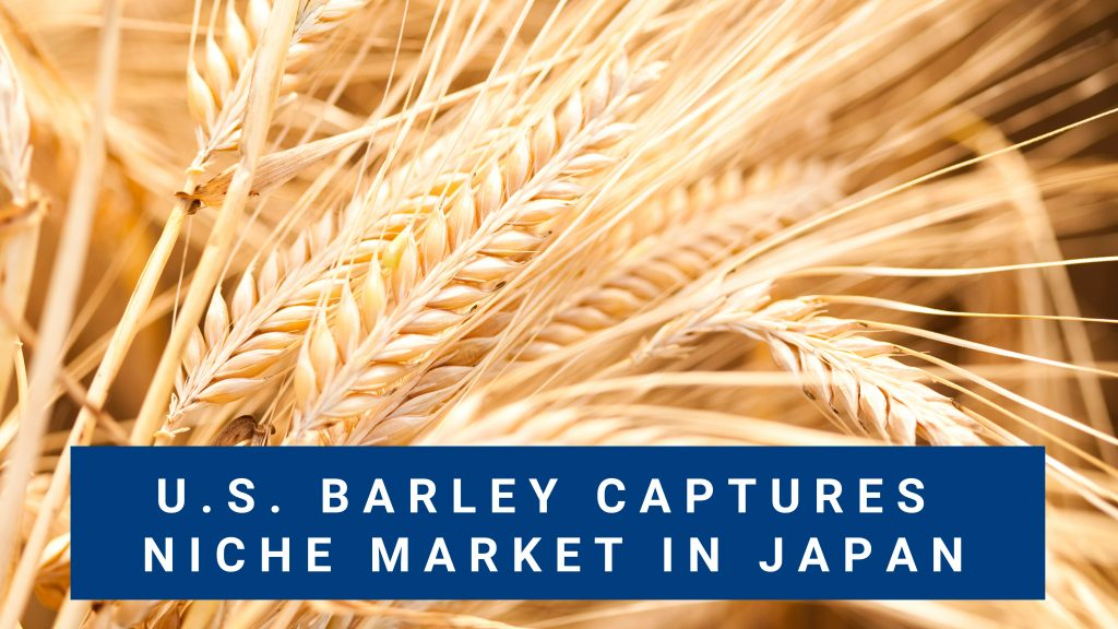 Food Barley Finds Niche Market in Japan