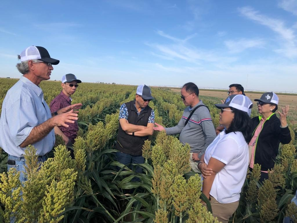 2019 Export Sorghum - SEA Team
