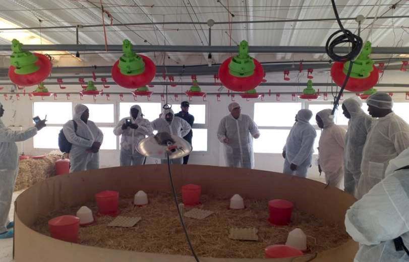 West Africa Poultry Training at FISA